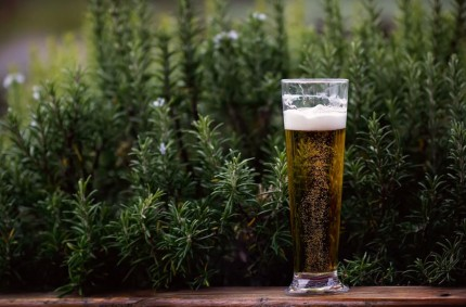beer glass in front of a flowerbed